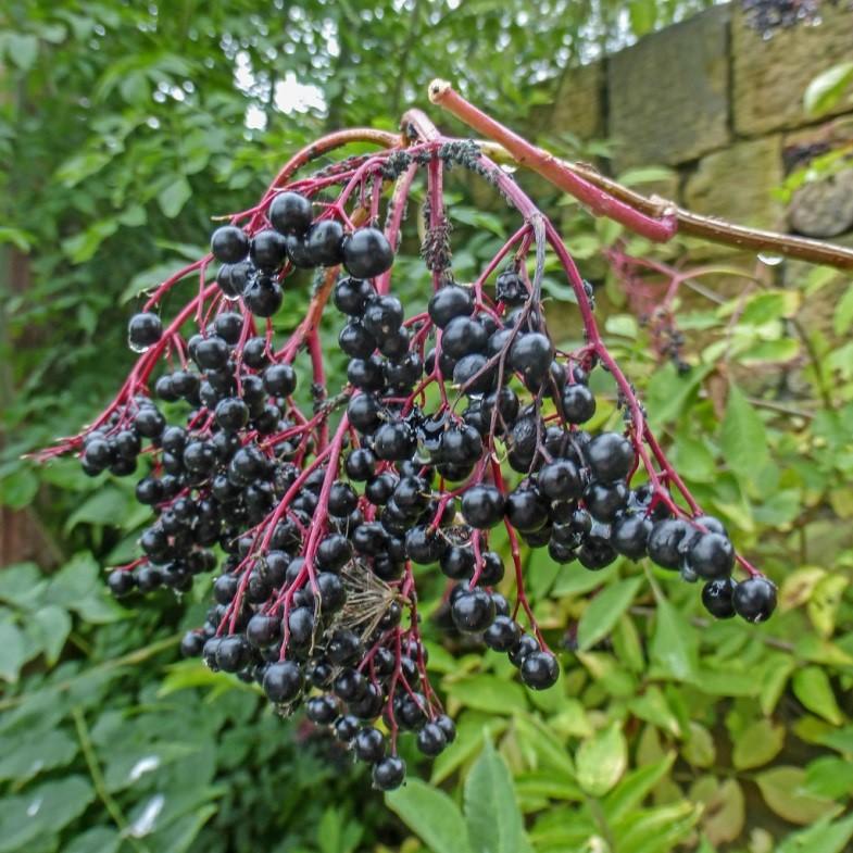 Gardening Gone Herbs – August 2019
