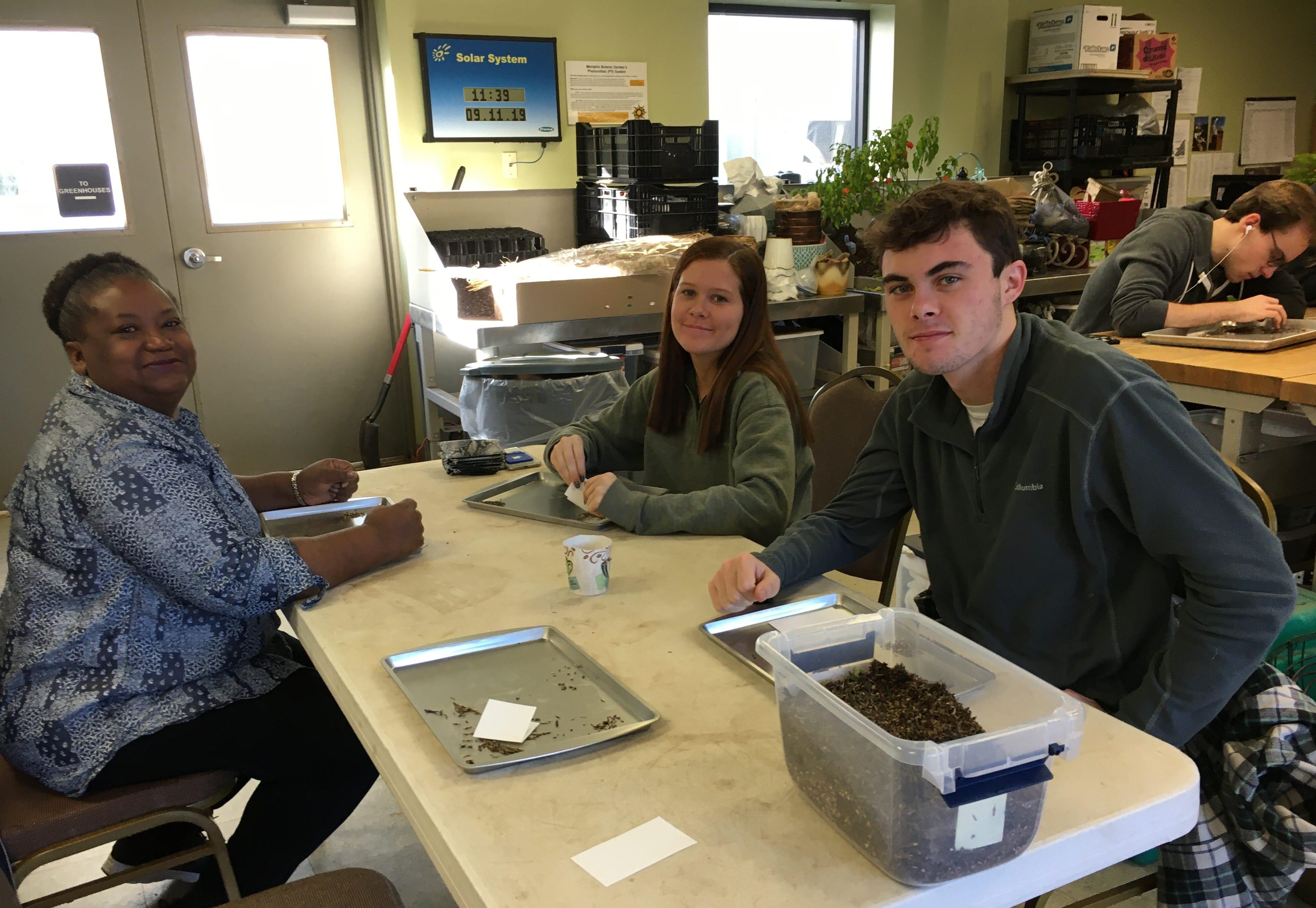 Herbal Work Study – Seeds