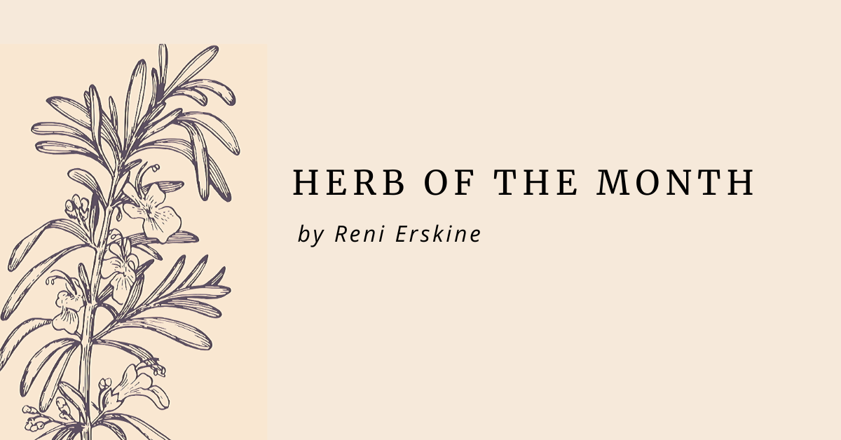 HERB OF THE MONTH – MARCH: HEARTSEASE
